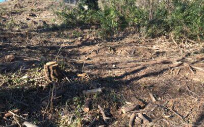 INTERPELLANZA: su risposta a interrogazione bosco